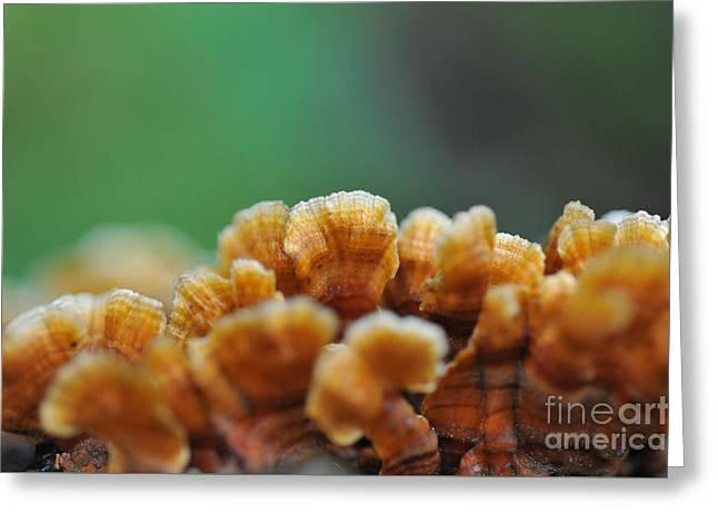 Fungus Growing On Log Greeting Card by Dan Friend