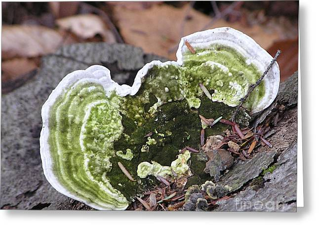 Fungus Number One Greeting Card by James T