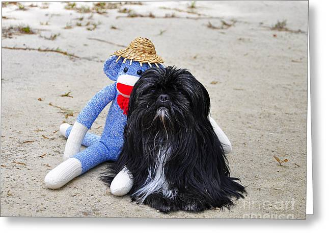 Funky Monkey And Sweet Shih Tzu Greeting Card
