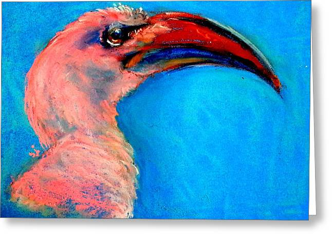 Funky Red-billed Hornbill Art Print Greeting Card by Sue Jacobi