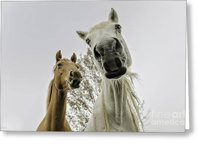 Funny Horses Greeting Card by Cindy Bryant