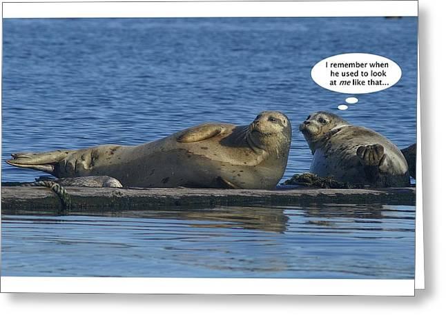 Funny Seals Greeting Card