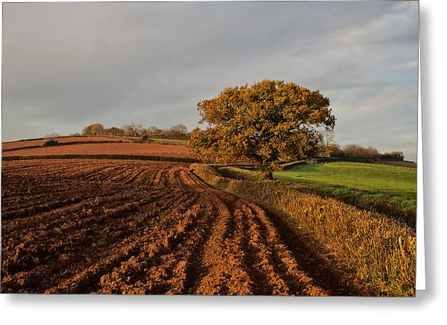 Furrows And Field Greeting Card by Pete Hemington