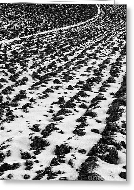 Furrows Greeting Card by John Farnan
