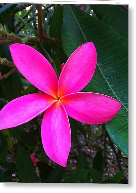 Fuschia Plumeria Bloom Greeting Card