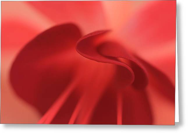 Fuscia Greeting Card by Rebeka Dove