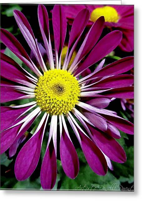 Fushia Daisies Blooming Greeting Card
