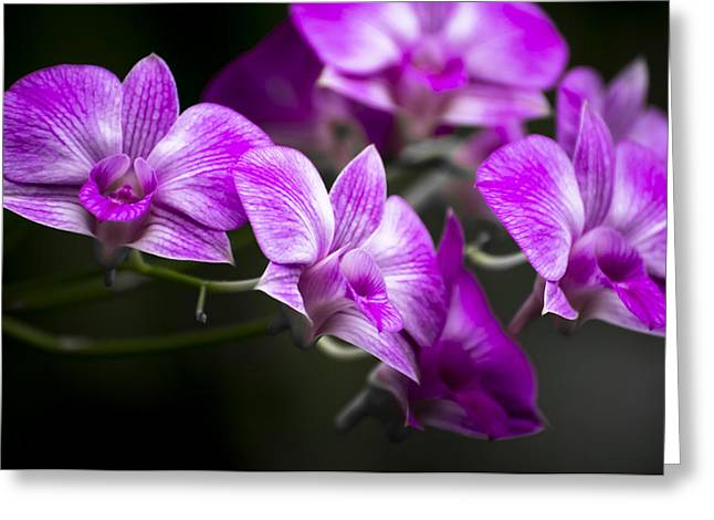 Fushia Orchid Greeting Card