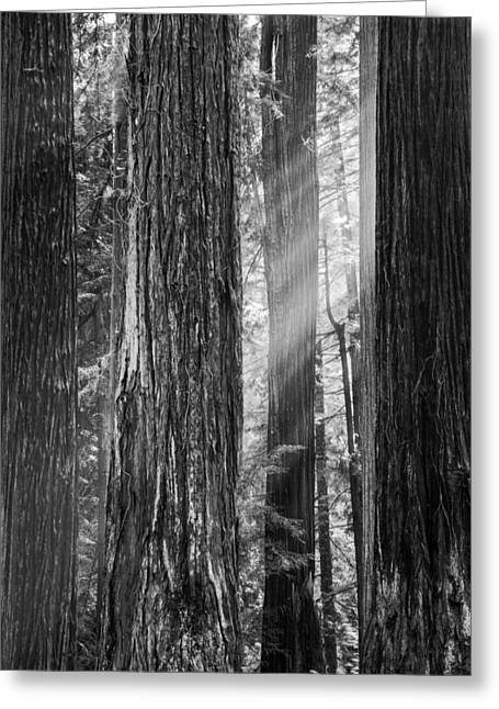 Future Giants Monochrome Greeting Card