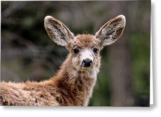 Fuzzy Fawn Greeting Card