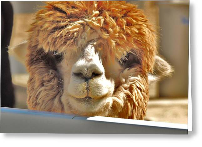 Fuzzy Wuzzy Alpaca Greeting Card