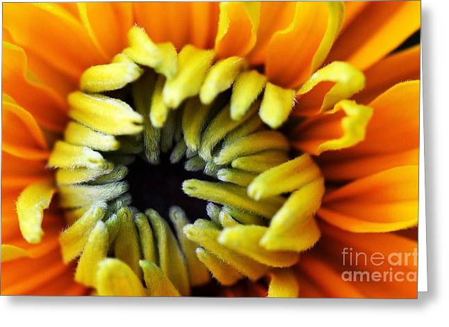 Greeting Card featuring the photograph Fuzzy Wuzzy by Judy Wolinsky