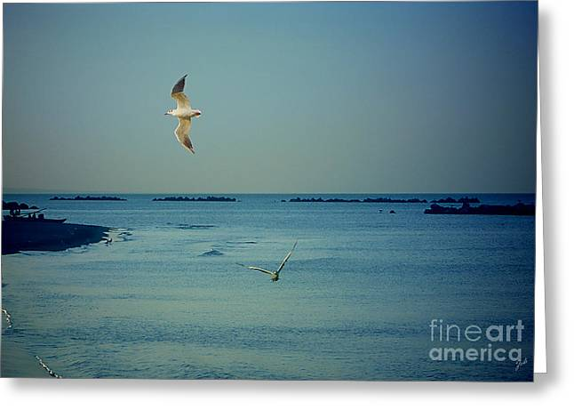 Gabbiani - Seagulls Greeting Card by Ze  Di