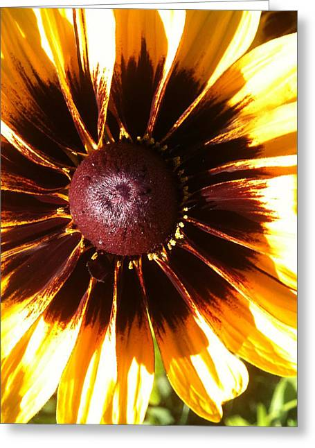 Greeting Card featuring the photograph Gaillardia by Gary Stamp