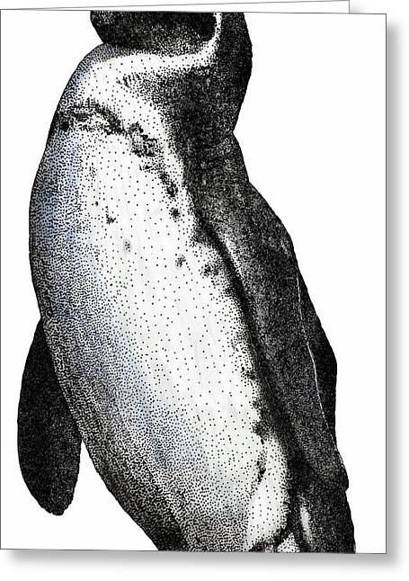 Galapagos Penguin Greeting Card by Roger Hall