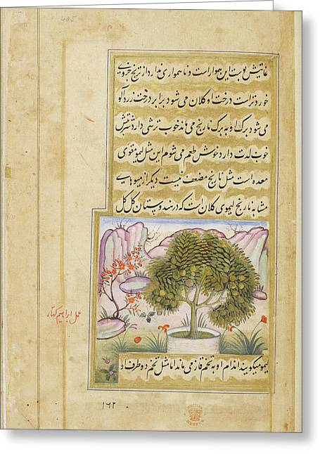 Galgal' (a Type Of Large Lime) Greeting Card by British Library