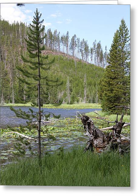 Gallatin River Yellowstone  Greeting Card by Christiane Schulze Art And Photography