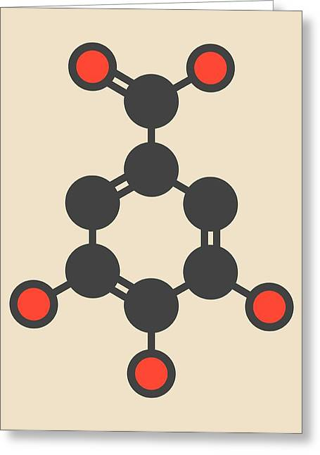 Gallic Acid Molecule Greeting Card