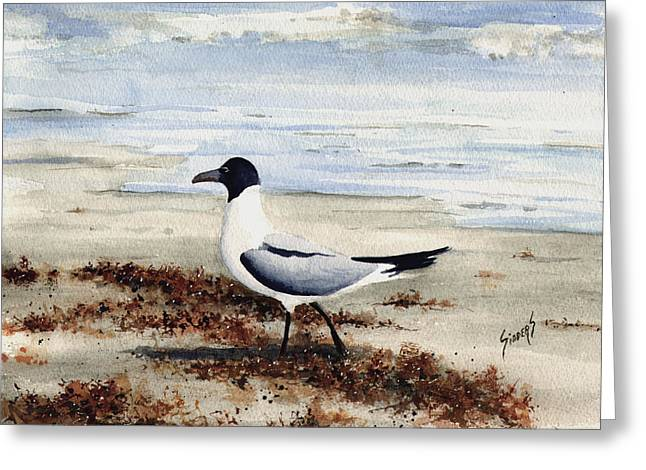Galveston Gull Greeting Card by Sam Sidders