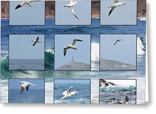 Gannets Galore Greeting Card by Terri Waters
