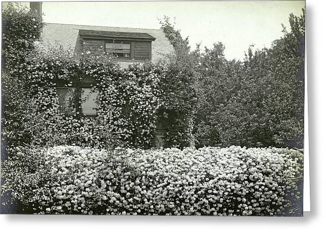 Garden And House Overgrown With Roses, Southern Pacific Greeting Card