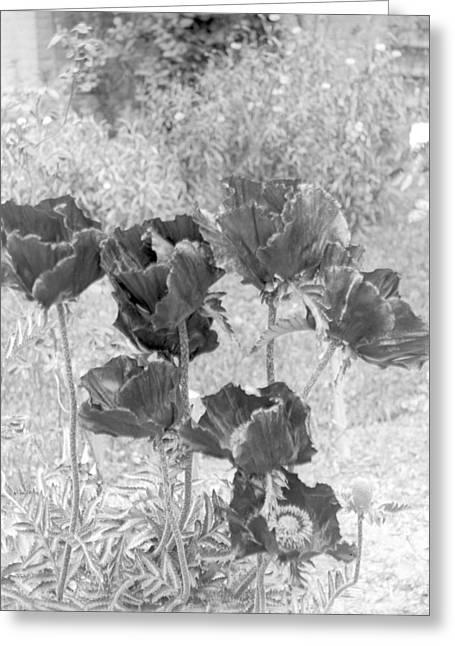 Garden Beauty Greeting Card
