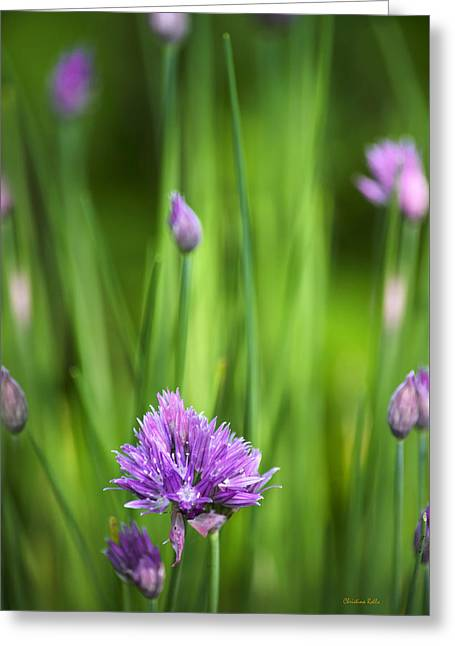 Garden Chives Greeting Card by Christina Rollo