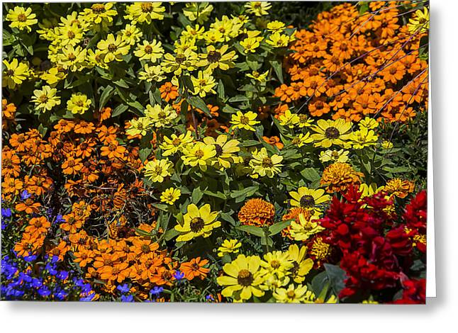 Garden Colors Greeting Card by Garry Gay