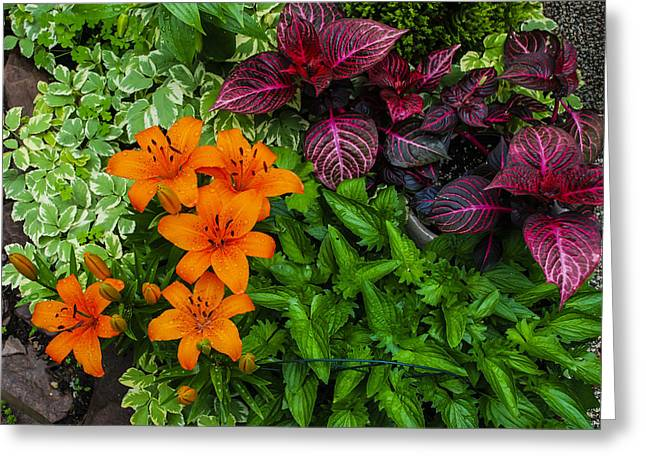 Greeting Card featuring the photograph Garden Colors by Phil Abrams