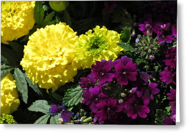 Garden Contrast Greeting Card by Fortunate Findings Shirley Dickerson