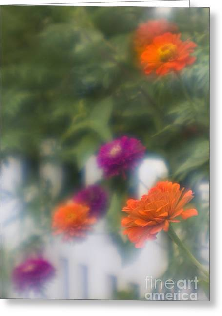 Garden Fence - D009100 Greeting Card by Daniel Dempster