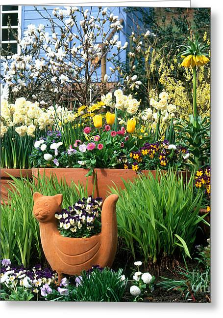 Garden Flowers In Containers Greeting Card by Hans Reinhard