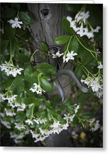 Garden Gate Greeting Card by Judy Hall-Folde