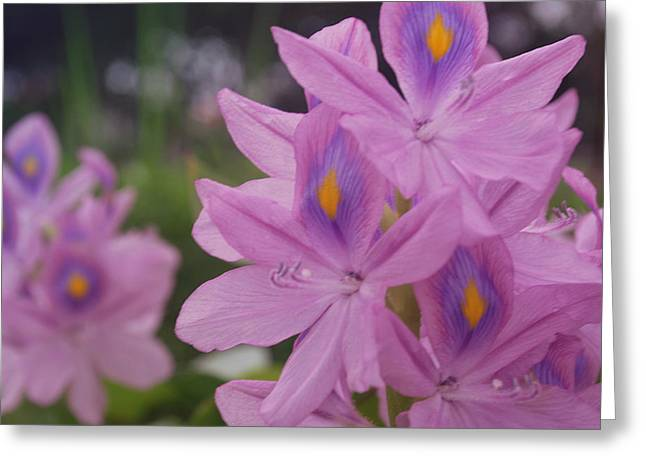 Garden Is Watching Greeting Card by Miguel Winterpacht