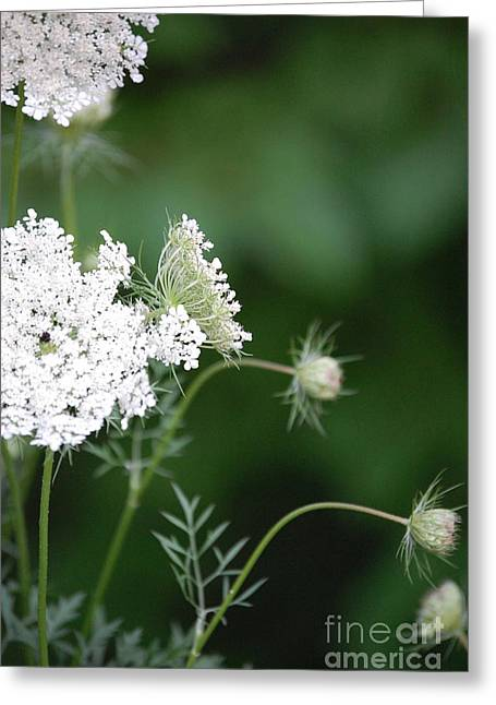 Garden Lace Group By Jammer Greeting Card