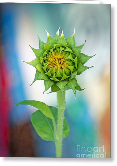 Greeting Card featuring the photograph Garden Of Many Colors by Gwyn Newcombe