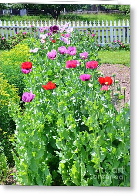 Garden Of Poppies Greeting Card by Kathleen Struckle