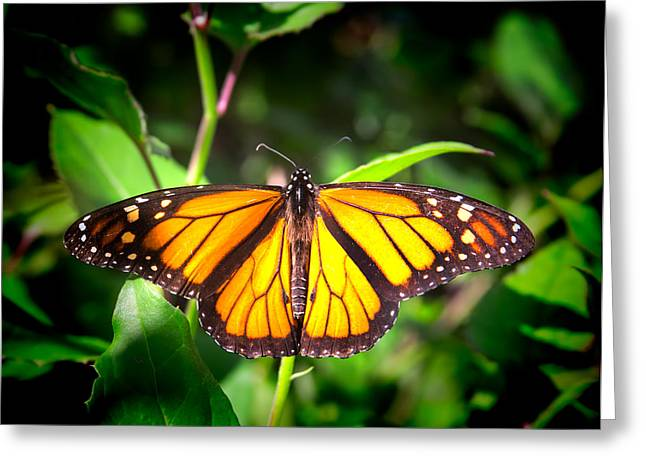 Garden Of The Monarch Greeting Card by Mark Andrew Thomas
