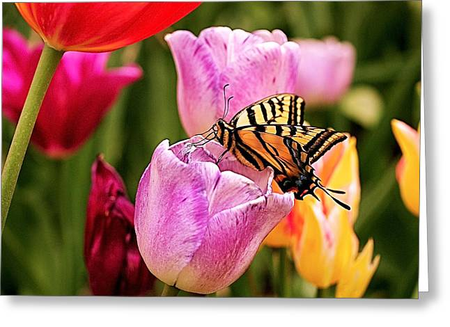 Garden Party Greeting Card by Rona Black
