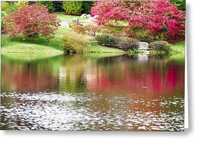 Garden Pond Greeting Card by Oscar Gutierrez