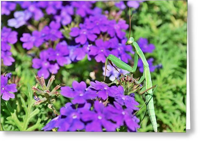 Garden Prayer Greeting Card