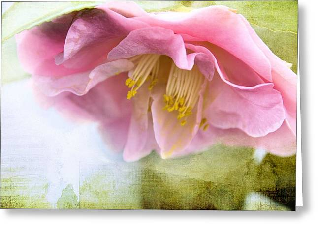 Garden Song Greeting Card by Jan Amiss Photography