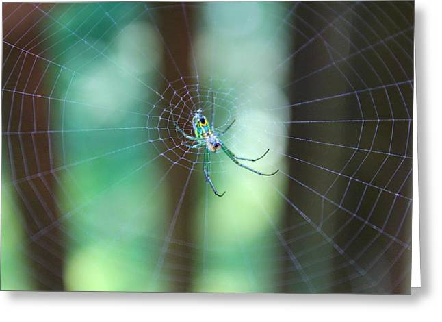 Greeting Card featuring the photograph Garden Spider by Candice Trimble