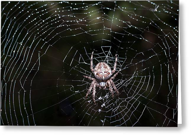 Greeting Card featuring the photograph Garden Spider by Matt Malloy