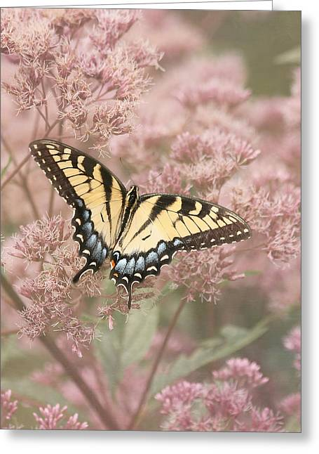 Garden Visitor - Tiger Swallowtail Greeting Card by Kim Hojnacki