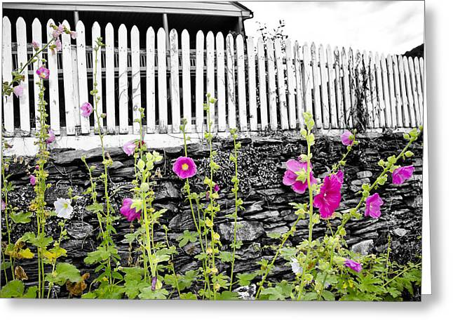 Garden Wall - Harpers Ferry Greeting Card by Bill Cannon