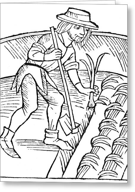Gardener Planting Leeks Greeting Card by Granger