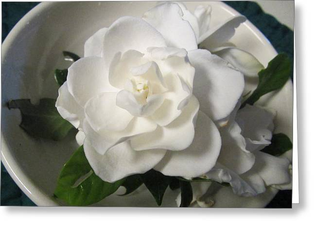 Gardenia Bowl Greeting Card