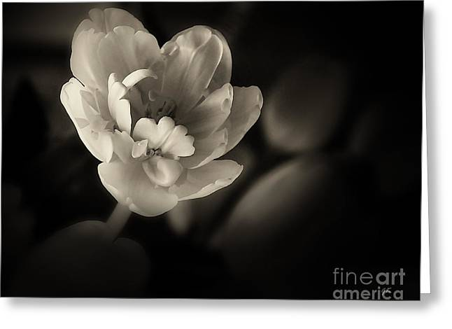 Greeting Card featuring the photograph Gardenia by Gerlinde Keating - Galleria GK Keating Associates Inc