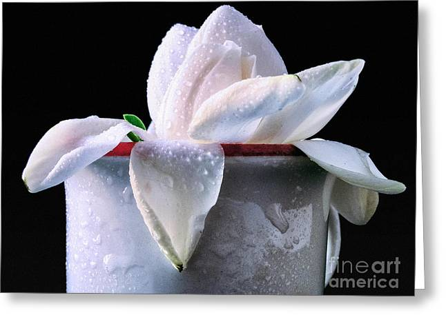 Greeting Card featuring the photograph Gardenia In Coffee Cup by Silvia Ganora